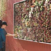 Location: a living 'wall' Date: 2010-03-01Photo courtesy of: hortulus