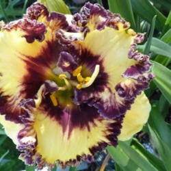 Image from plant ID 181847