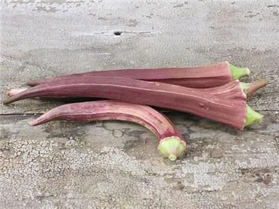 Photo of Okra (Abelmoschus esculentus 'Red Burgundy') uploaded by Joy