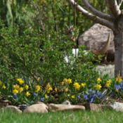 Location: My Garden, UtahDate: 2015-03-28