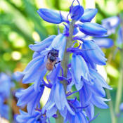 Location: My GardensDate: June 1, 2008In Moderate Shade #Pollination #Bees