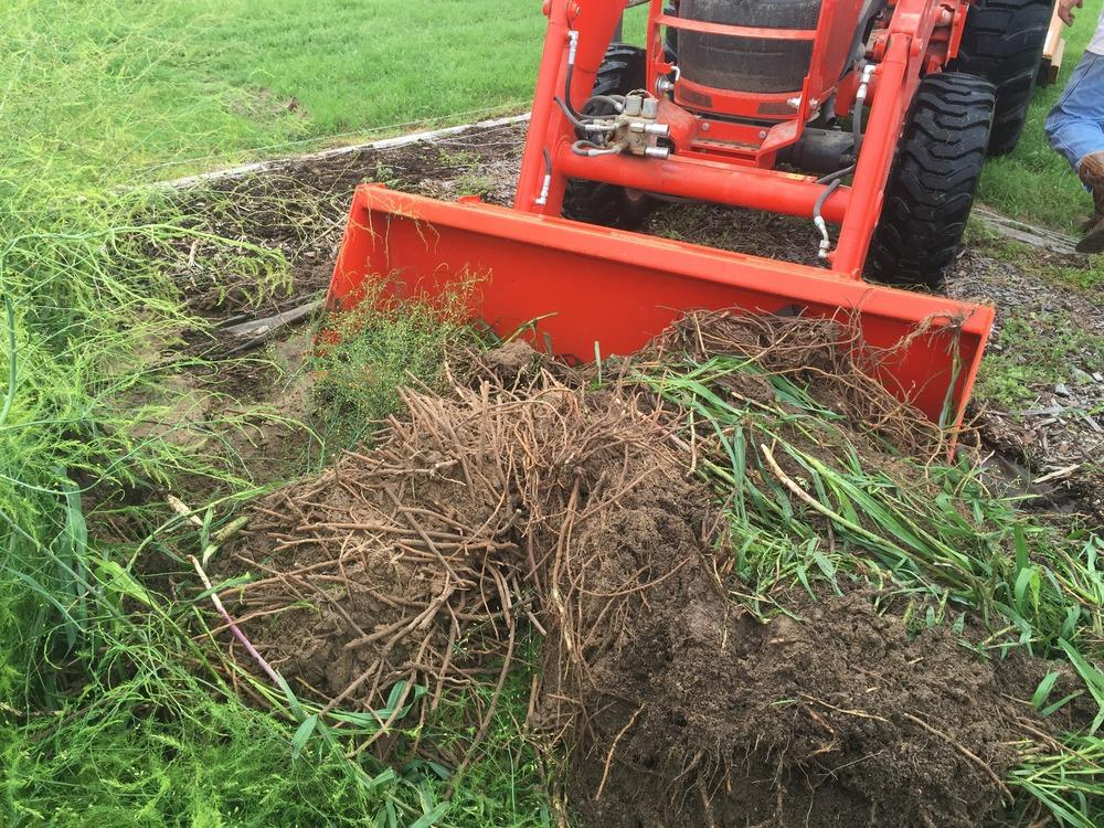 how to kill johnson grass in flower beds
