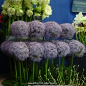 Location: Harrogate Spring Flower Show 2015, Yorkshire, UKDate: 2015-04-25Warmenhoven nurseries display