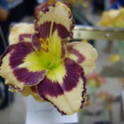 Location: Pinellas Park, FLDate: 2015-05-02Bay Area Daylily Society Show and Sale