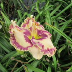 Thumb of 2015-05-18/gardenglory/9c32a3