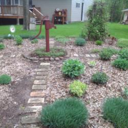 Old Bricks Get New Life in the Garden