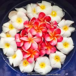 Thumb of 2015-05-25/GigiPlumeria/3aedbb
