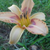 Date: 2014-07-30Tink seedling FFO