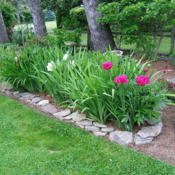Location: Peony garden (part of Belmont garden) full sunDate: 2015-06-07Landscape shot.