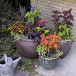 Watering Tricks and Tips for Container Gardening