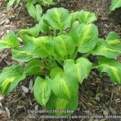 Location: Ottawa, ONDate: 2015-06-21An update on this plant.