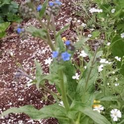 Thumb of 2015-06-25/Catmint20906/2a858b