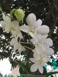 Thumb of 2015-07-05/GigiPlumeria/38357b