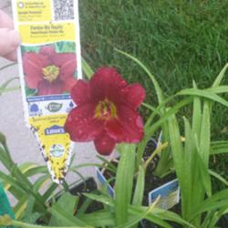 Thumb of 2015-07-09/DogsNDaylilies/bd4664
