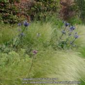 Location: Alnwick Garden, Northumberland, UKDate: 2015-07-15In a late summer border