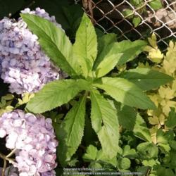 Thumb of 2015-07-18/Catmint20906/bfe913
