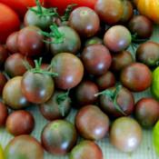 Location: Northeastern, TexasDate: 2015-07-04Black cherry tomatoes - surrounded by other tomatoes in the backg