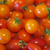 Location: My garden, North Central IdahoDate: 7-26-2015The best tomato I've ever eaten! I grew these from seed, and they