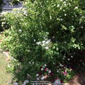 Location: Test garden - Jeff. CountyDate: 2015-06-12