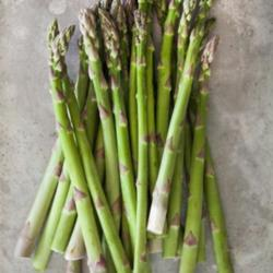 Asparagus, the Perennial Vegetable That Keeps Giving