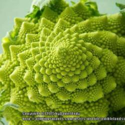 Romanesco, the Unearthly Vegetable