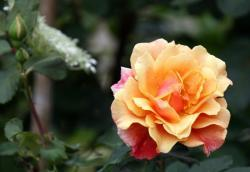 Thumb of 2015-08-05/Calif_Sue/1e48bf