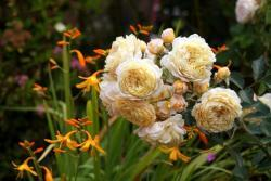 Thumb of 2015-08-05/Calif_Sue/62d73c