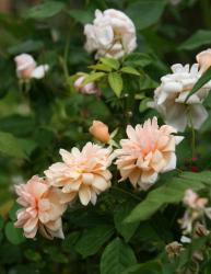Thumb of 2015-08-05/Calif_Sue/63b28d