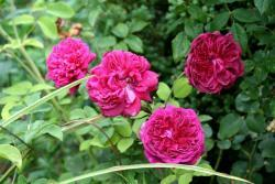 Thumb of 2015-08-05/Calif_Sue/86eda5