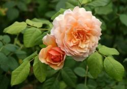 Thumb of 2015-08-05/Calif_Sue/96d967