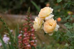 Thumb of 2015-08-05/Calif_Sue/ca242a