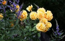 Thumb of 2015-08-05/Calif_Sue/d178c7
