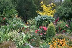 Thumb of 2015-08-08/Calif_Sue/7f57f2