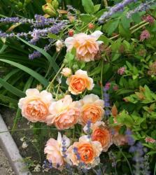 Thumb of 2015-08-08/Calif_Sue/ac9e8d