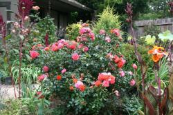 Thumb of 2015-08-08/Calif_Sue/cbec56