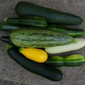 Location: Long Island, NY Date: 2015-07-12An assortment of summer squash.