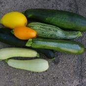 Location: Long Island, NY Date: 2015-07-23Assorment of Summer Squash.