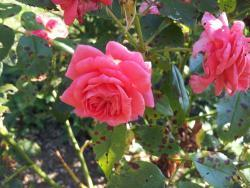 Thumb of 2015-08-09/gemini_sage/21c2d0