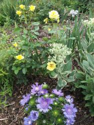 Thumb of 2015-08-09/gemini_sage/63f622