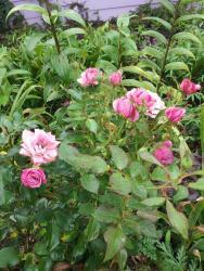 Thumb of 2015-08-09/gemini_sage/987364