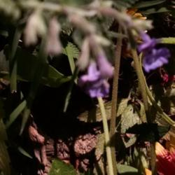 Thumb of 2015-08-15/Catmint20906/cd8053