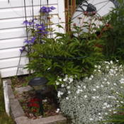 Location: Peterborough, ON, CanadaDate: 2015-06-07seems to be a particular favourite of the neighbours to