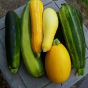 Location: Long Island, NY Date: 2015-08-18Summer squashes.