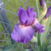 Location: My Garden in Janesville, WIDate: 2015-05-31
