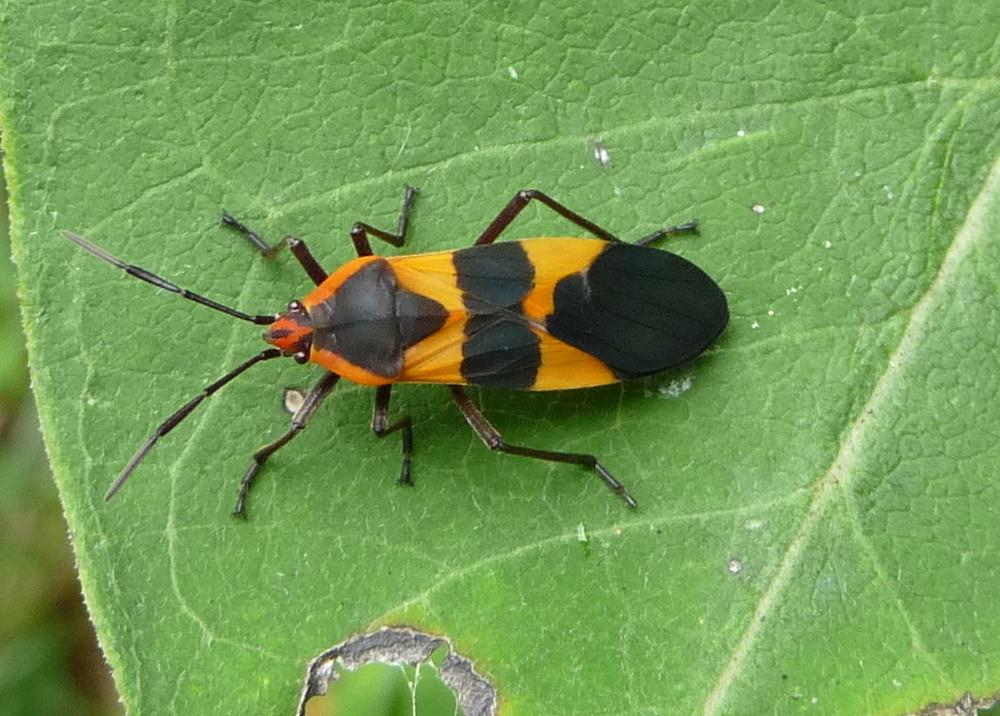 Garden Insect Identification - 0425