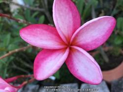 Thumb of 2015-09-01/GigiPlumeria/509c2b