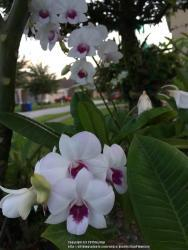 Thumb of 2015-09-01/GigiPlumeria/5b970a