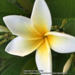 Thumb of 2015-09-01/GigiPlumeria/6778ae