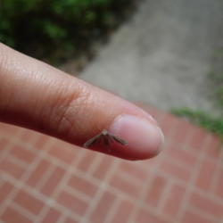 Thumb of 2015-09-05/mellielong/18fec8