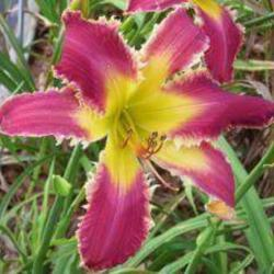 Thumb of 2015-09-09/BobandDaylilies/32899c